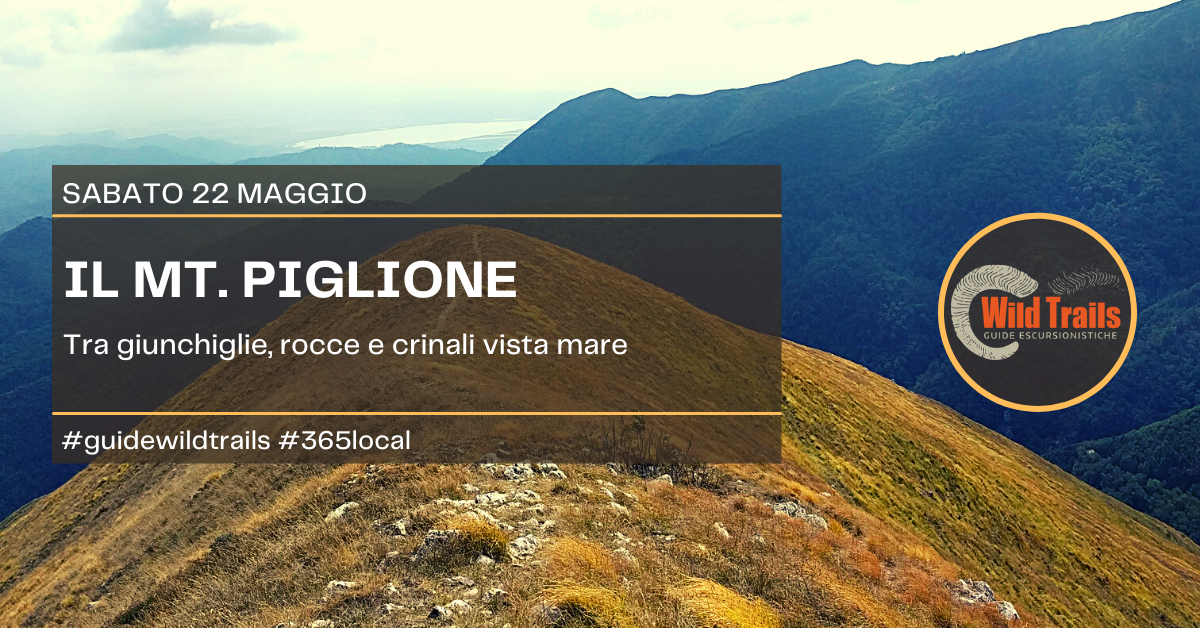 Le giunchiglie del Mt. Piglione
