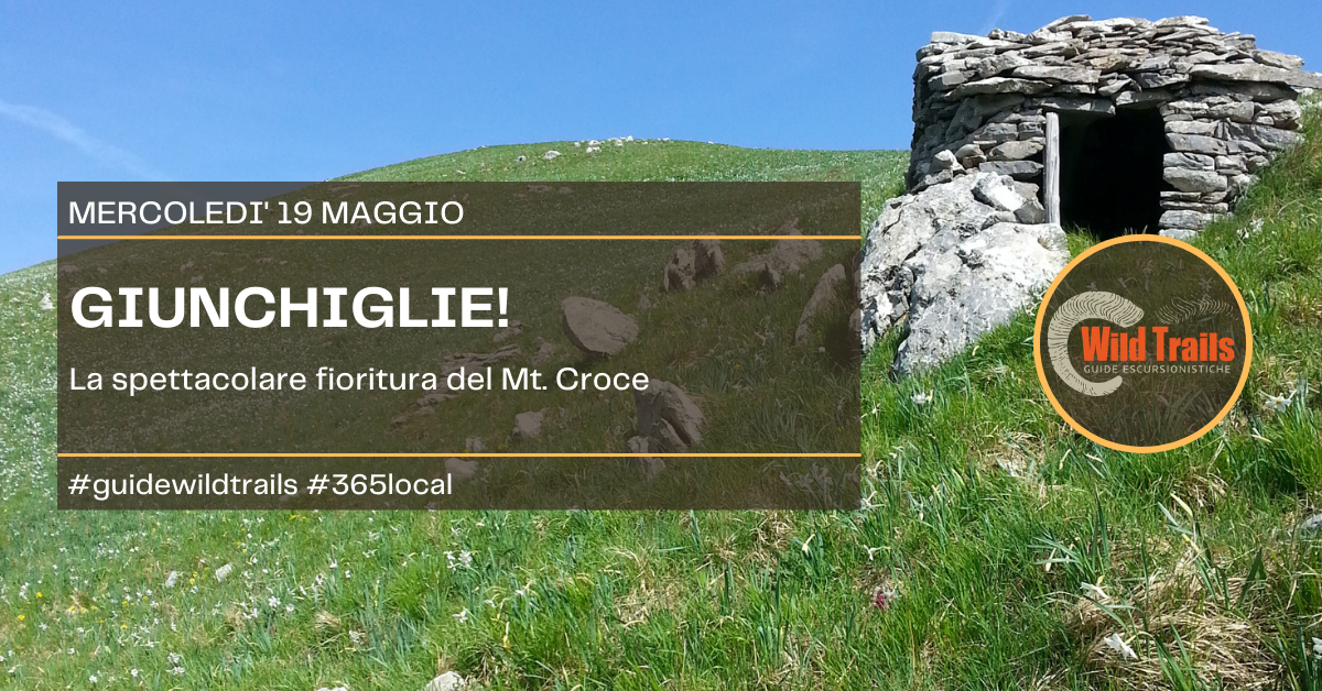 Le giunchiglie del Croce! Out of weekend